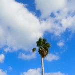 新しい生活様式で過ごす夏にお勧めの季節を感じるアイテム